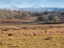 Gebied en eiken hout op mistige dag Stock Foto
