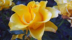 Gebied en tuinbloemen Royalty-vrije Stock Afbeelding