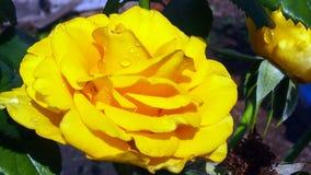 Gebied en tuinbloemen Stock Foto's