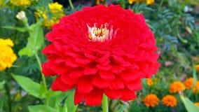 Gebied en tuinbloemen Stock Fotografie
