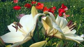 Gebied en tuinbloemen Royalty-vrije Stock Afbeeldingen