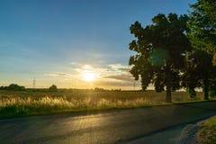 Gebied en weg met bomen - backlight tijdens zonsondergang Royalty-vrije Stock Afbeelding