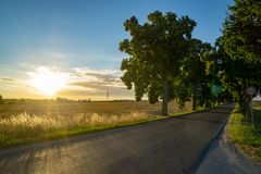 Gebied en weg met bomen - backlight tijdens zonsondergang Royalty-vrije Stock Foto's