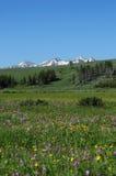 Gebied flowert en bergen die in sneeuw worden behandeld Royalty-vrije Stock Afbeelding
