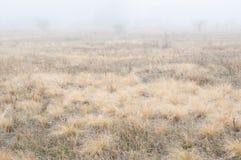 Gebied, hond, de herfst, mistige dag royalty-vrije stock afbeelding