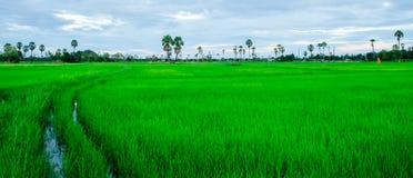 Gebied, landbouwbedrijf, cornfield, aard, groene boom, berg, sunet Stock Afbeeldingen