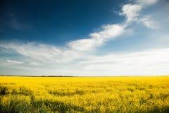 Gebied lookes zoals Oekraïense vlag Stock Fotografie