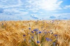 Gebied met blauwe hemel en witte wolken Royalty-vrije Stock Foto