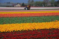 Gebied met bloemen Stock Fotografie