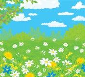 Gebied met bloemen stock illustratie
