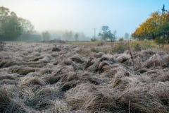 gebied met een droog die gras door vorst wordt behandeld stock fotografie