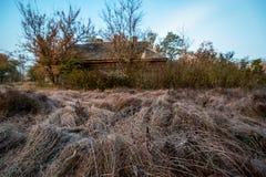 gebied met een droog die gras door vorst wordt behandeld royalty-vrije stock foto's