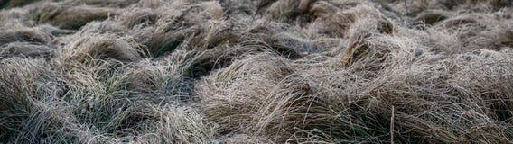 gebied met een droog die gras door vorst wordt behandeld stock afbeeldingen