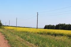 Gebied met gele bloemen en polen met macht lin Royalty-vrije Stock Afbeeldingen