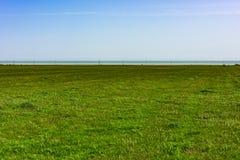 Gebied met groen gras Royalty-vrije Stock Afbeeldingen