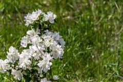 Gebied met groene gras en bloemen Landbouw, installatie Backgrou Stock Fotografie