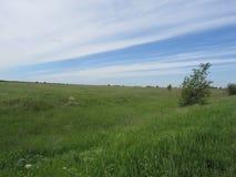 Gebied met groene gras en hemel Stock Afbeeldingen