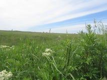 Gebied met groene gras en hemel Stock Foto's