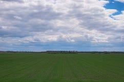 Gebied met groene kleine installaties en bomen bij de achtergrond Landschap in de lente bewolkte dag Royalty-vrije Stock Foto