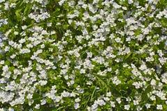 Gebied met heldere weidebloemen die wordt behandeld Royalty-vrije Stock Fotografie