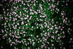 Gebied met kleine bloemen royalty-vrije stock afbeelding
