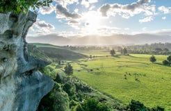 Gebied met schapen Landschap met heuvels en bergen Het gebied van Nelson, Nieuw Zeeland royalty-vrije stock fotografie