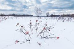 Gebied met sneeuw, droge kruiden en struiken wordt behandeld die uit de sneeuw gluren die stock foto's