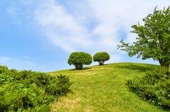 Gebied met struiken en bomen tegen de blauwe hemel royalty-vrije stock afbeeldingen