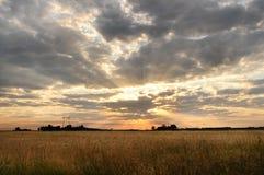 Gebied met tarwe bij zonsondergang Een mooie hemel met stralen van de het plaatsen zon, de uitgestrektheid van gebieden Royalty-vrije Stock Foto