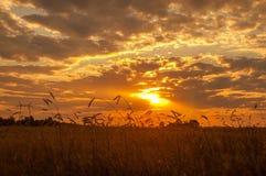 Gebied met tarwe bij zonsondergang Een mooie hemel met stralen van de het plaatsen zon, de uitgestrektheid van gebieden Stock Afbeelding