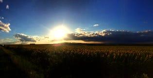 Gebied met zonnebloemen bij zonsondergang royalty-vrije stock foto's