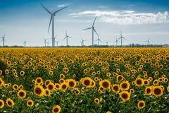 Gebied met zonnebloemen en ecomacht, windturbines Royalty-vrije Stock Foto's