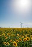 Gebied met zonnebloemen en ecomacht, windturbines Royalty-vrije Stock Afbeeldingen