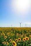 Gebied met zonnebloemen en ecomacht, windturbines Stock Fotografie