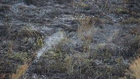 Gebied na bushfire stock videobeelden