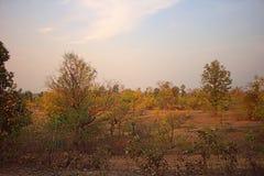 Gebied rond Nagpur, India Droge uitlopers met boomgaarden & x28; landbouwers gardens& x29; Royalty-vrije Stock Afbeeldingen