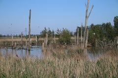 Gebied rond Zevenhuizerplas, een meer tussen Oud Verlaat en Rotterdam Nesselande stock afbeeldingen