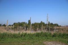 Gebied rond Zevenhuizerplas, een meer tussen Oud Verlaat en Rotterdam Nesselande stock fotografie