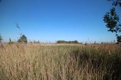 Gebied rond Zevenhuizerplas, een meer tussen Oud Verlaat en Rotterdam Nesselande stock foto's
