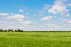 Gebied tegen de hemel met wolken en bossen Royalty-vrije Stock Afbeeldingen