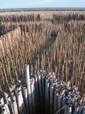Gebied van bamboebuis Royalty-vrije Stock Afbeelding