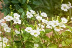 Gebied van bloeiend bloemen of gras, bosdepartement van het weide macrobeeld Stock Foto's