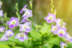 Gebied van bloeiend bloemen of gras, bosdepartement van het weide macrobeeld Stock Fotografie