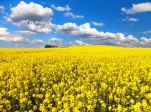 Gebied van bloeiend raapzaad met mooie wolken royalty-vrije stock fotografie
