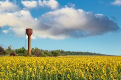 Gebied van bloeiende zonnebloemen op hemelachtergrond Royalty-vrije Stock Afbeelding