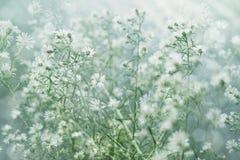 Gebied van bloem Stock Foto's