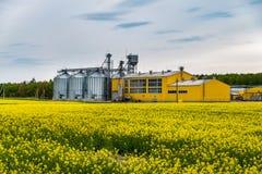 Gebied van bloem van raapzaad, canolakoolzaad in Brassica napus bij agro-verwerkt installatie voor verwerking en zilveren silo's  stock afbeeldingen