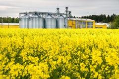 Gebied van bloem van raapzaad, canolakoolzaad in Brassica napus bij agro-verwerkt installatie voor verwerking en zilveren silo's  royalty-vrije stock fotografie