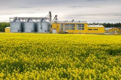 Gebied van bloem van raapzaad, canolakoolzaad in Brassica napus bij agro-verwerkt installatie voor verwerking en zilveren silo's  stock afbeelding