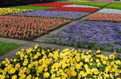 Gebied van bloemen Royalty-vrije Stock Afbeelding